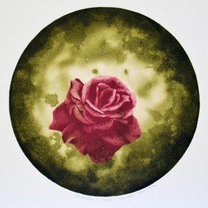 Annette Hammarén (f. 1956), Pink Rose, serigrafi och akvatintetsning
